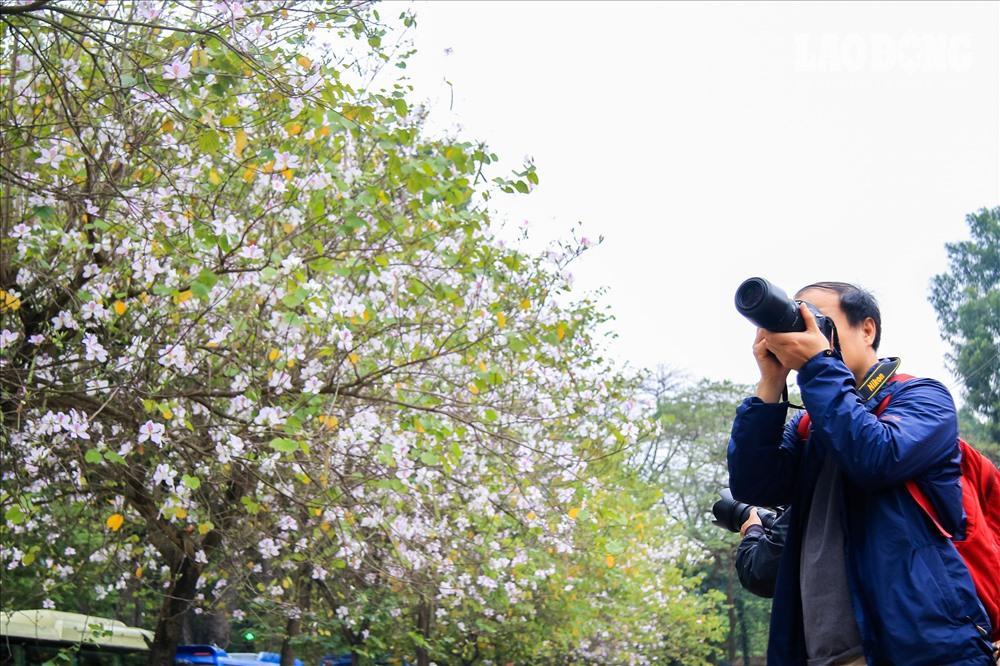 Các nhiếp ảnh gia cũng cũng không muốn bỏ lỡ khoảnh khắc những cánh hoa mỏng như giấy bay bay trong cơn gió lạnh.