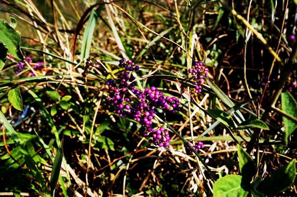 Hoa, cỏ dại mọc trên các triền đồi vùng sơn cước Bình Liêu. Ảnh:Poohxinh