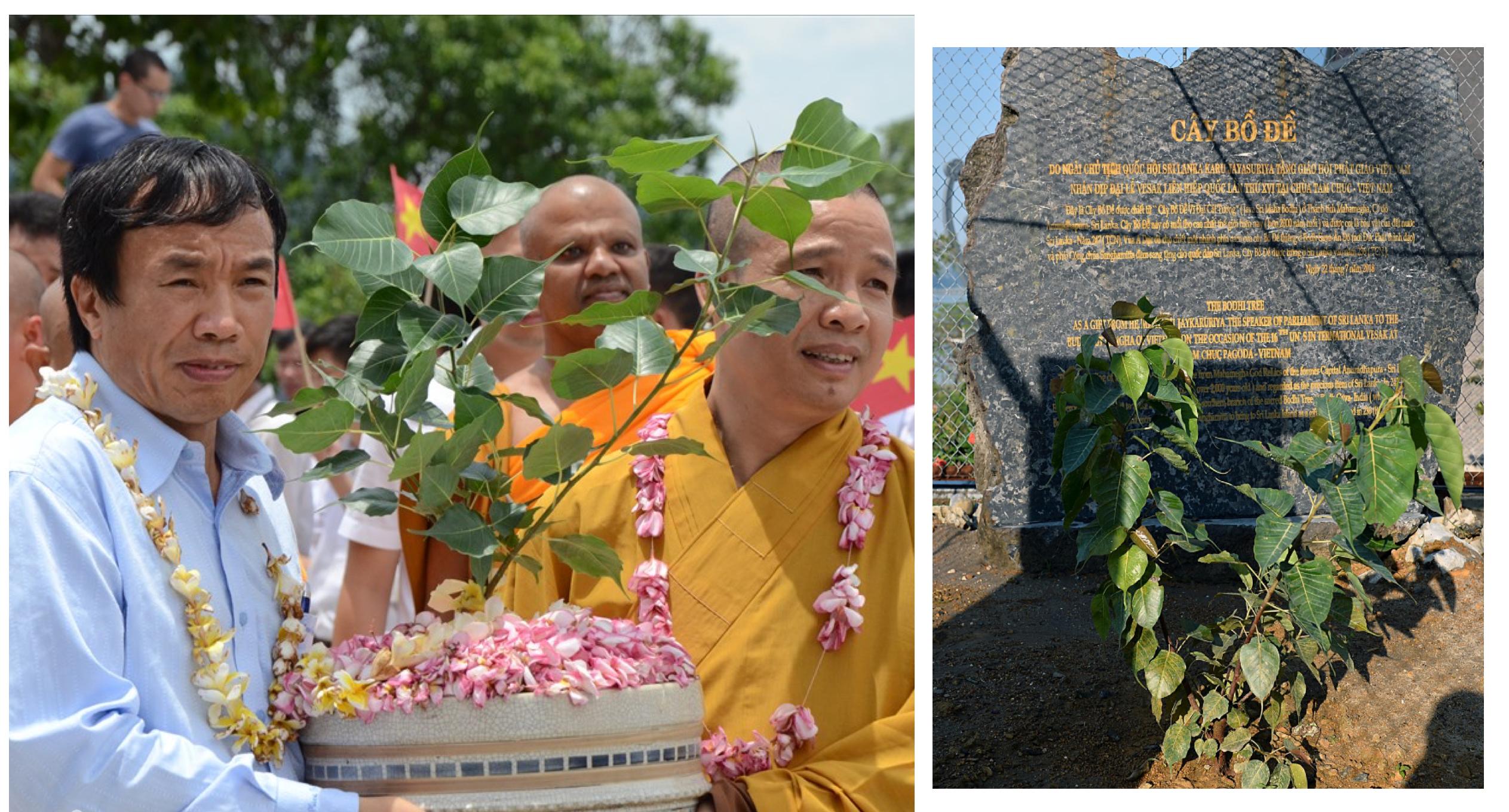 """Chùa Tam Chúc còn đang trồng cây bồ đề được chiết từ cây """"Cây Bồ Đề Vĩ Ðại Cát Tường"""" có tuổi thọ lớn nhất thế giới do Chủ tịch Quốc hội Sri Lanka tặng cho Việt Nam."""