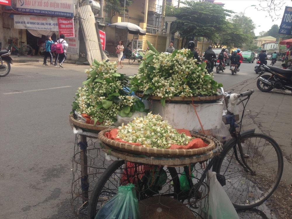 Mỗi ngày, người bán có thể bán được từ 7-10kg hoa.