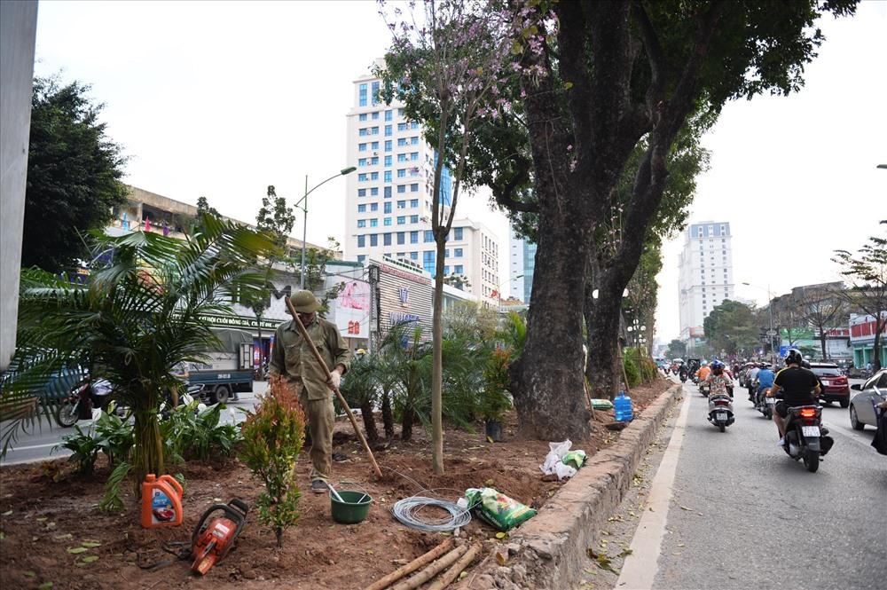 Trên đường Giảng Võ, công nhân đang trồng thêm cây xanh ở giải phân cách.