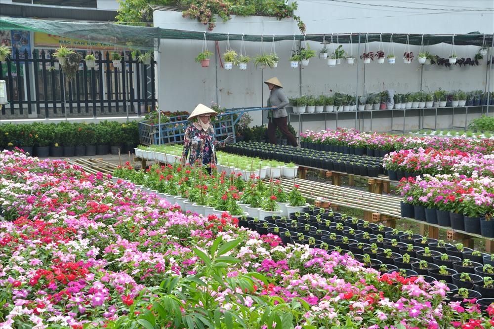 Một góc vườn hoa ở Sa Đéc. Ảnh: Lục Tùng