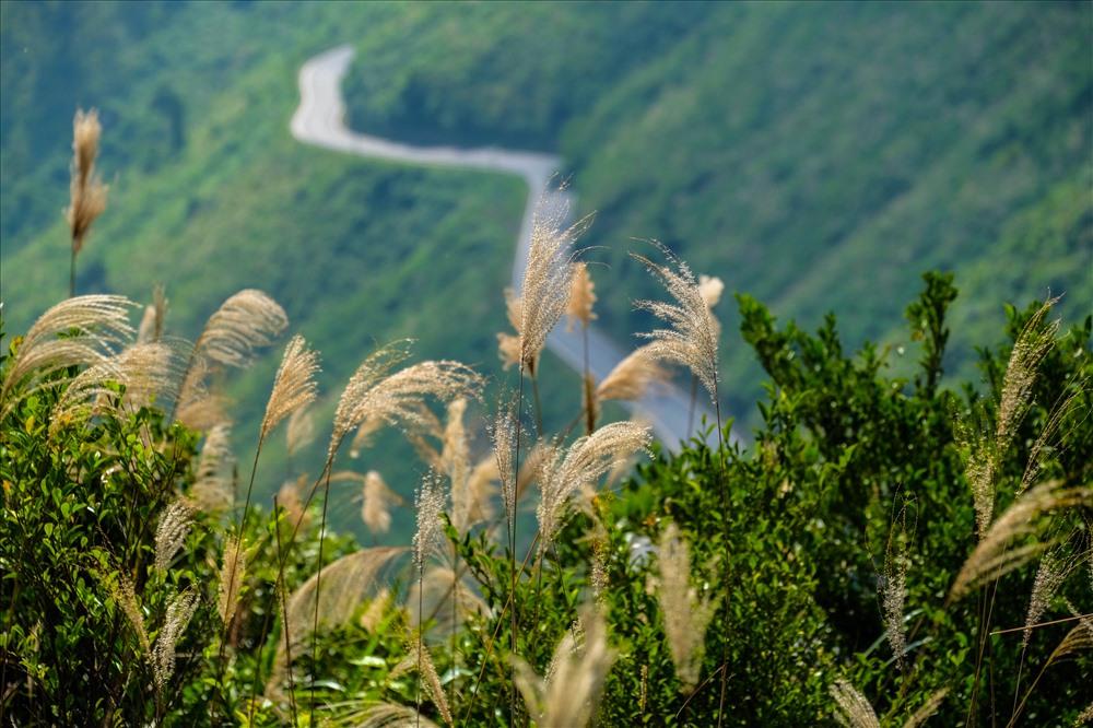 Cung đường uốn lượn của đèo Hải Vân khi nhìn từ đồi thông.
