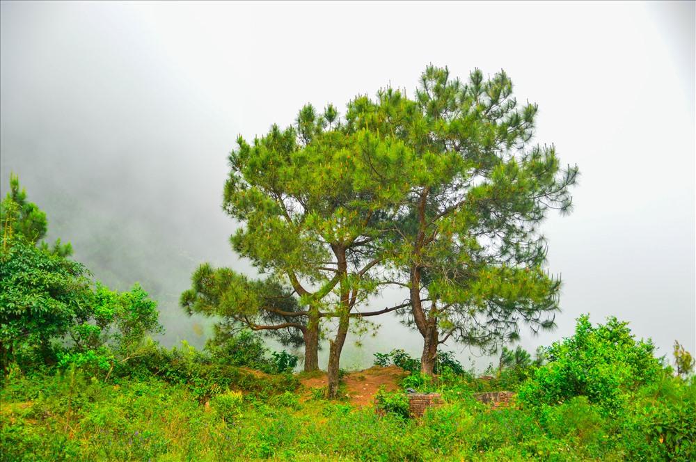 Không khí se lạnh ở đèo Hải Vân cộng với đó là một đồi thông đầy thơ mộng khiến du khách khi lên đây có cảm giác như đang ở Đà Lạt.