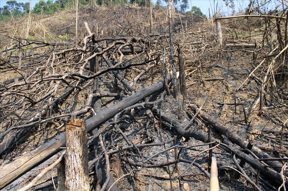Không chỉ có chặt hạ mà còn đốt cháy cả một vùng