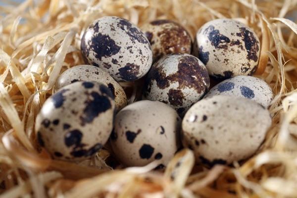 Trứng chim cút giúp tăng cường trí nhớ cho sĩ tử mùa thi
