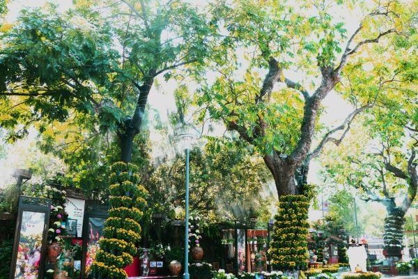 Những hàng cây xanh trên đường Phạm Hồng Thái được sắp đặt các chậu hoa cúc đủ sắc bao quanh thân cây tạo nên một khung cảnh rất ấn tượng cho du khách.