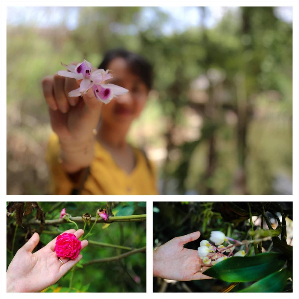 Hiện vườn lan của ông Hưng đã trở thành khu bảo tồn lan rừng vô giá ngay sát trung tâm TP. Buôn Ma Thuột. Đến với khu bảo tồn, du khách có thể cảm nhận một Troh Bư rợp mát bóng cây và cũng là nơi lưu lại nhưng khoảnh khắc đẹp của tuổi trẻ.