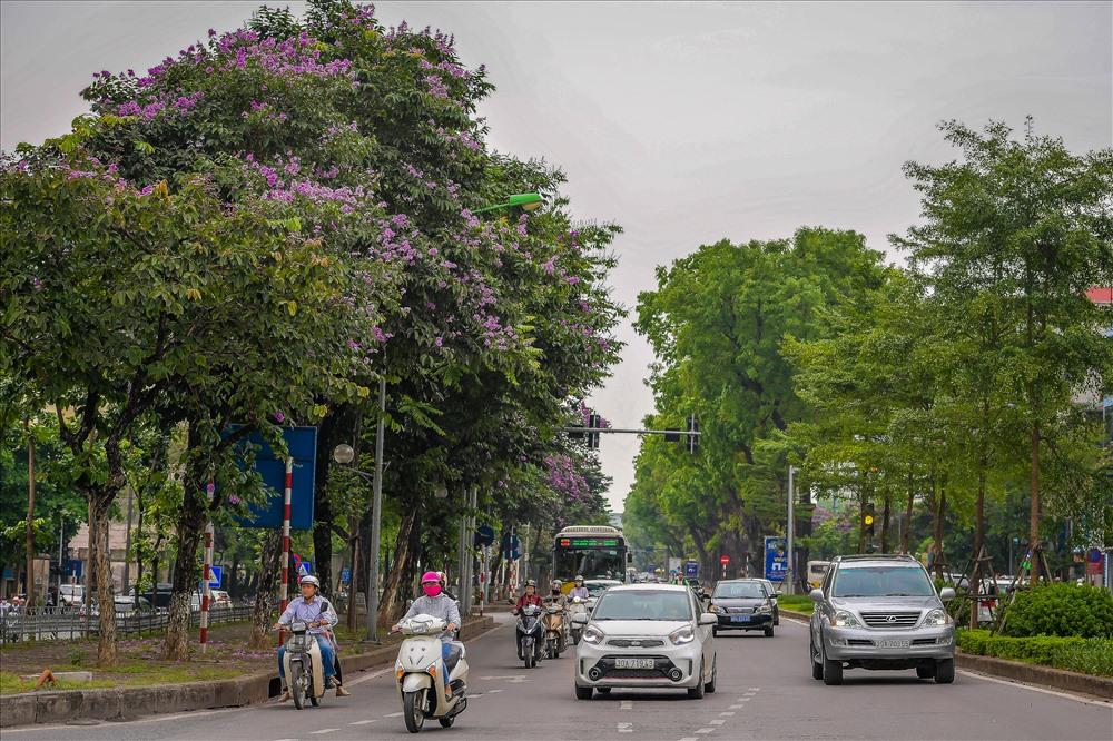 Hoa bằng lăng đã được trồng trên nhiều trên những con phố của Thủ Đô. Có nhiều con đường dù đã có tên nhưng vẫn được không ít người gọi là đường bằng lăng.