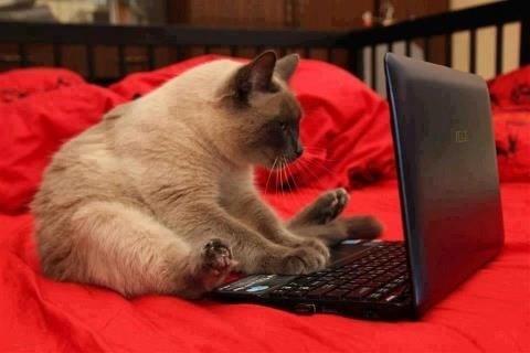 """Những chú mèo """"nghiện"""" máy tính thú vị"""