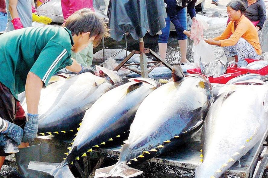EU cảnh báo thẻ vàng đối với hải sản Việt Nam trong vòng 6 tháng và yêu cầu các biện pháp khắc phục. Ảnh:TCTS cung cấp