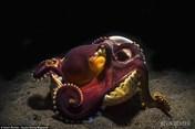 Đại dương đẹp lộng lẫy trong các tác phẩm đoạt giải cuộc thi ảnh dưới nước 2017
