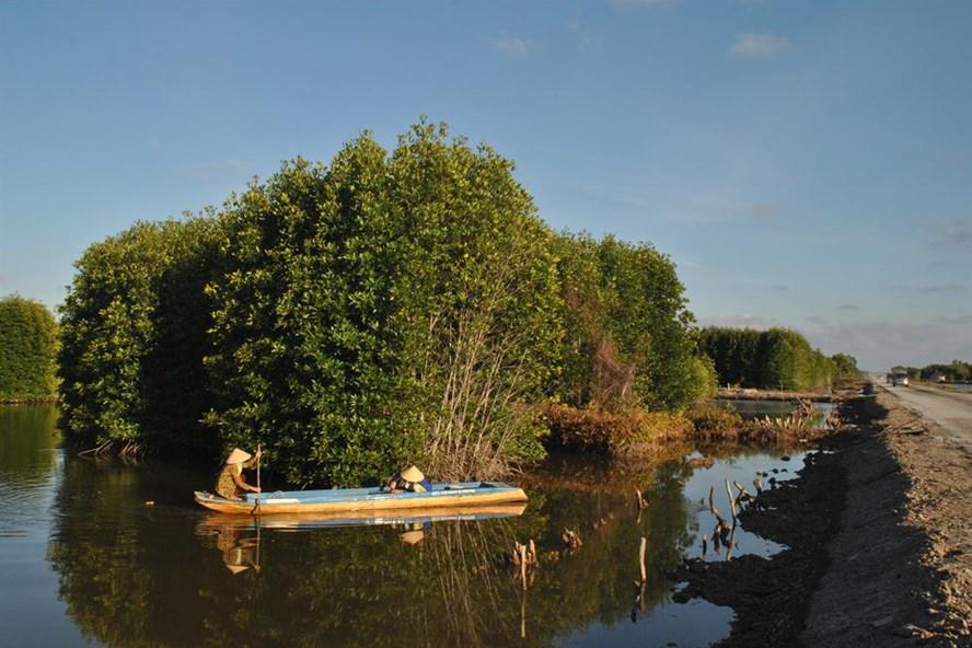 Mô hình sản xuất tôm - rừng vừa đảm bảo môi trường vừa phát triểm bền vững