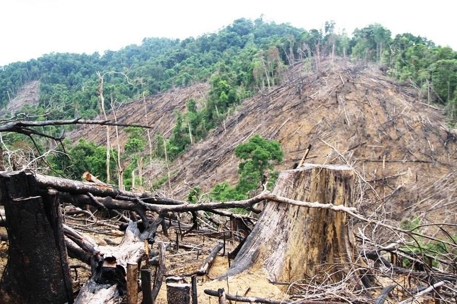 Rừng phòng hộ ở Tiên Lãnh bị phá hồi tháng 9.2017. Ảnh: Thanh Hải