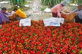 """Thịt heo đắt đỏ, thanh long """"rẻ thối"""" và chuyện buồn dài tập của nông sản Việt"""