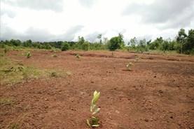 Đắk Lắk: 17.000 ha đất rừng bốc hơi sạch trong vòng 10 năm