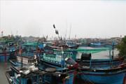 Ninh Thuận: Sóng từ 3 đến 5m, tàu thuyền khẩn trương tránh trú bão số 8