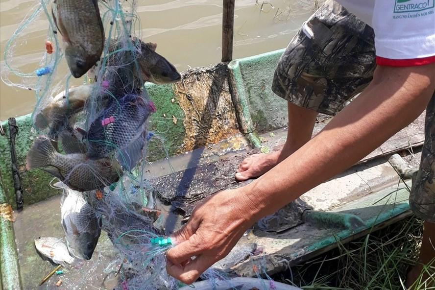 Bỏ lưới giăng cá phi chỉ cần 1 giờ đồng hồ là thu về trên 10 kg cá. Ảnh: Nhật Hồ