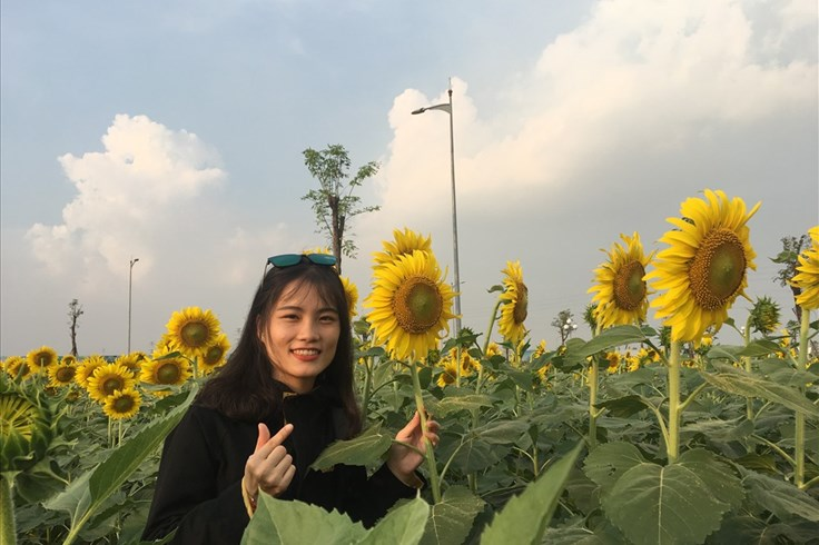 Giới trẻ mê mẩn vườn hoa hướng dương khổng lồ ở Sài Gòn