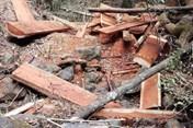 Đắk Lắk: Đùn đẩy trách nhiệm để mất rừng khu vực giáp biên