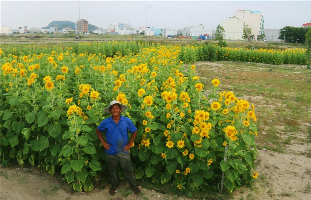 Lão nông Hà Văn Vũ bên bản đồ Việt Nam được tạo nên bởi hàng ngàn cây hoa hướng dương. Ảnh: H.L