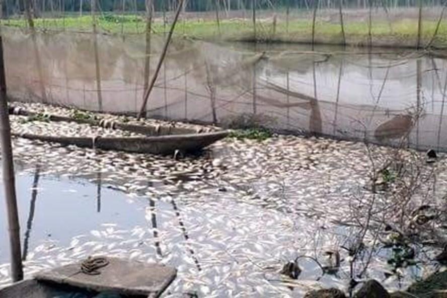 Cá chết trắng sông vì ô nhiễm. Ảnh: Quang Huy