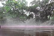 Dự báo thời tiết 3.5: Tiếp tục mưa rào, dông trên diện rộng; đề phòng lốc tố