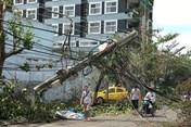 Bộ Nông nghiệp và Phát triển Nông thôn đề nghị Khánh Hòa khắc phục tồn tại trong bão số 12