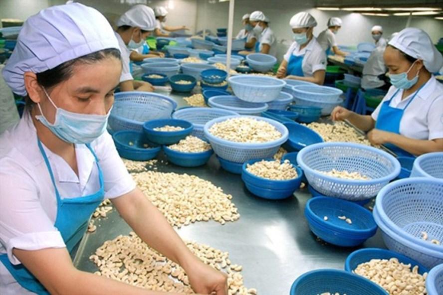 Chế biến hạt điều xuất khẩu tại Công TNHH Mỹ Lệ (Bình Phước). Ảnh: C.H