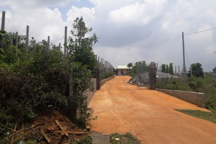 Trang trại của Trưởng ban QLRPH Bắc Biển Hồ - Nguyễn Đức trên đất lâm nghiệp. Ảnh ĐÌNH VĂN