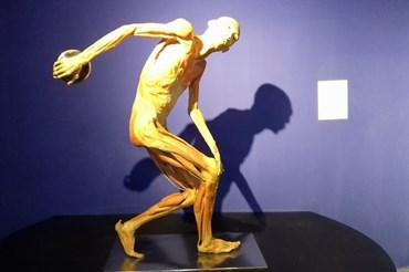 Tất cả các mẫu vật được trưng bày tại triển lãm đều là mẫu vật người thật được bảo tồn bằng công nghệ plastination.