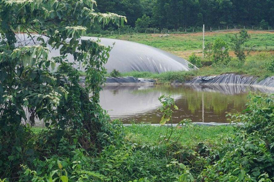 Hồ chứa nước thải bên trong trại lợn của bà Phương. Ảnh: PV