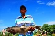 """Người dân """"khóc ròng"""" vì cá trắm nuôi lồng chết hàng loạt trên sông Bồ"""