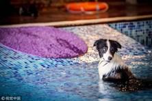 Chùm ảnh: Choáng với biệt thự sang trọng dành cho chó cưng trong khuôn viên 8.600km2