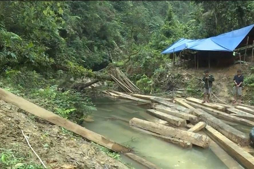 Lực lượng chức năng kiểm đếm số gỗ tại hiện trường.