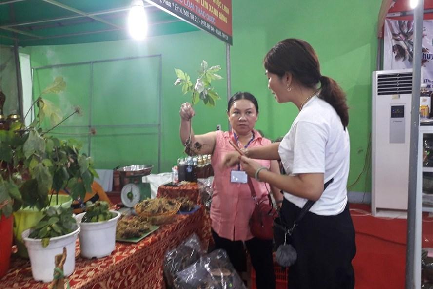 Sâm Ngọc Linh rất được ưa chuộng trên thị trường hiện nay, là loại dược liệu rất tốt cho sức khỏe. Ảnh: TD
