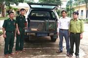 Vườn quốc gia Phong Nha - Kẻ Bàng: Phát hiện nhiều động vật rừng quý hiếm bị đặt bẫy trái phép