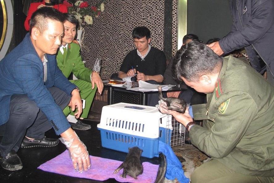 Cơ quan chức năng bắt quả tang đối tượng mua bán, vận chuyển 2 cá thể gấu ngựa tại quán cà phê. Ảnh: CACC.