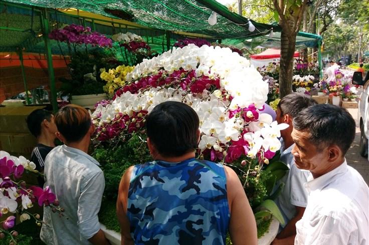 Muôn hoa khoe sắc tại các chợ hoa, điểm bán hoa kiểng ở TPHCM