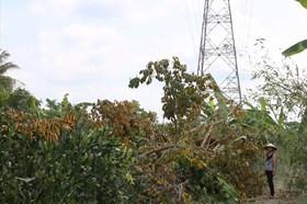 Nhùng nhằng giải tỏa cho đường dây 500kV tại Hậu Giang