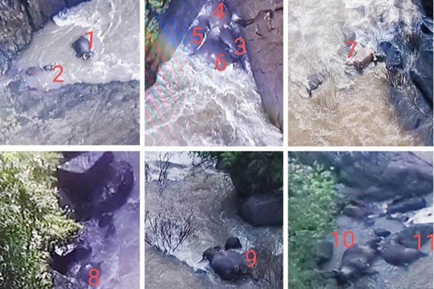 Vị trí và số lượng voi trong vụ chết lớn nhất từng được ghi nhận ở Khao Yai. Ảnh: Bangkok Post.