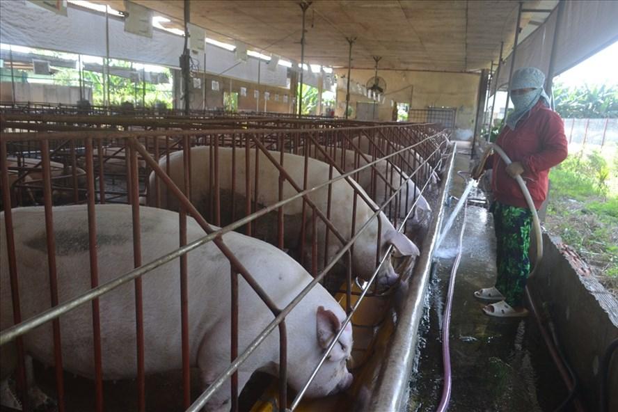 Chăn nuôi heo tại tỉnh Đồng Nai.