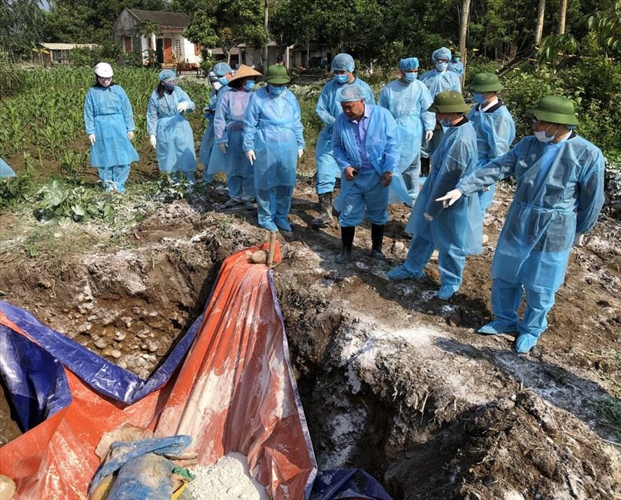 Tiêu hủy lợn chết vì dịch tả lợn Châu Phi tại huyện Hải Hà. Ảnh: BQN