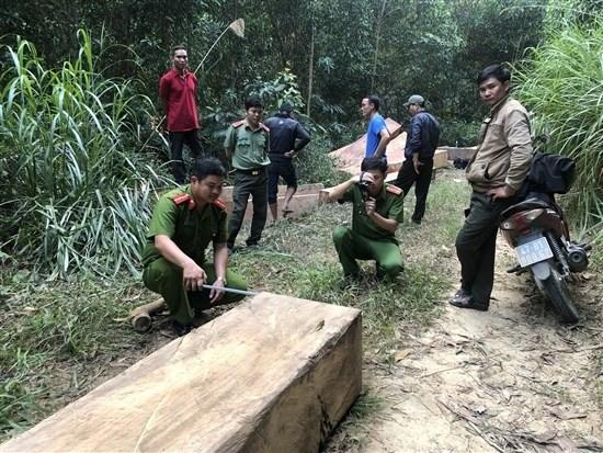 Nhóm thanh niên lái công nông, gọi đồng bọn cùng phá rừng Đắk Lắk