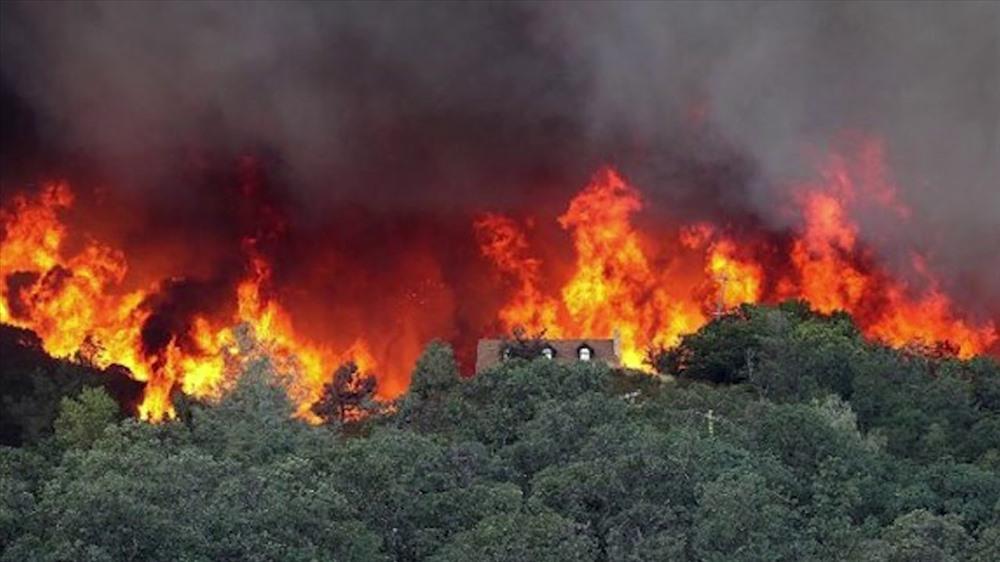 Kết quả hình ảnh cho cháy rừng