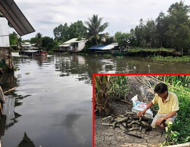 Nước sông Cái Lớn đổi màu, bốc mùi hôi thối, thủy sản của nhiều hộ dân bị chết hàng loạt.