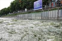 Nước hồ Tây lại cuồn cuộn chảy qua khu thí điểm làm sạch sông Tô Lịch