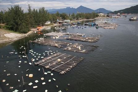 Đà Nẵng: Nuôi cá lồng bè tự phát trên vịnh Mân Quang