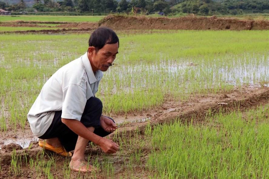 Việc nắn dòng thi công thủy điện khiến việc sản xuất của nông dân bị ảnh hưởng. Ảnh: LX