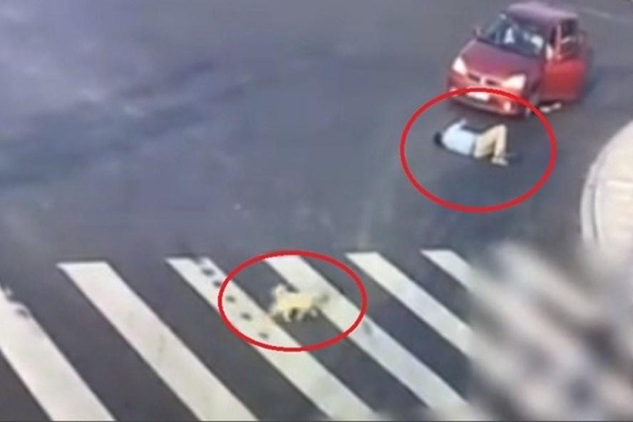 Chú chó nhỏ quan sát và sang đường theo đúng phần đường dành cho người đi bộ khi một người đàn ông đi sai làn và bị tai nạn. Ảnh: AD.